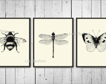 Bee Dragonfly Butterfly Print Wall Art Set of 3 Beautiful Vintage Illustration Drawing Black and White Garden Cottage Home Decor to Frame