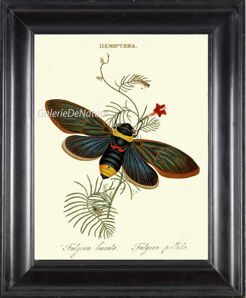Butterfly Moth Print Art D5 4x6 5x7 8x10 11x14 Beautiful Antique Insect  Colored Colorful Chart Red Flower Home Wall Room Decor to Frame