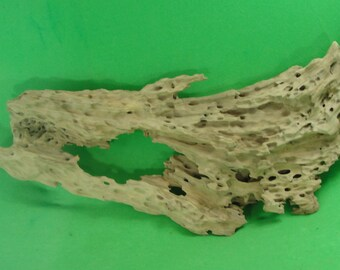 Cypress Driftwood from the swamps of Louisiana.