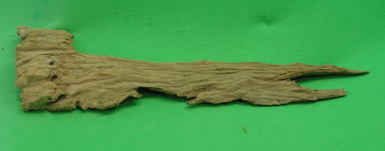 Natural Cypress Driftwood Cypress Driftwood from the Swamps of Louisiana