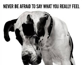 "Dogs - ""Never be afraid to say what you really feel"" - 24x36"" Poster"