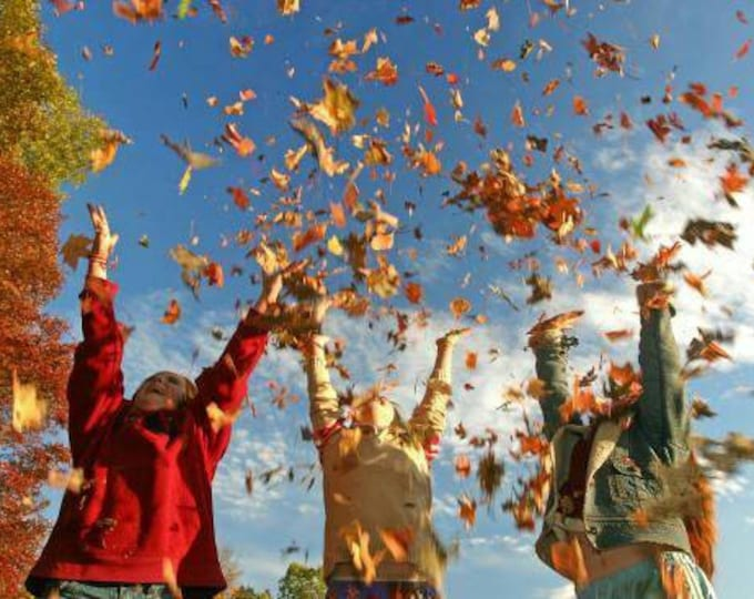Festive Fall Diffuser Blend
