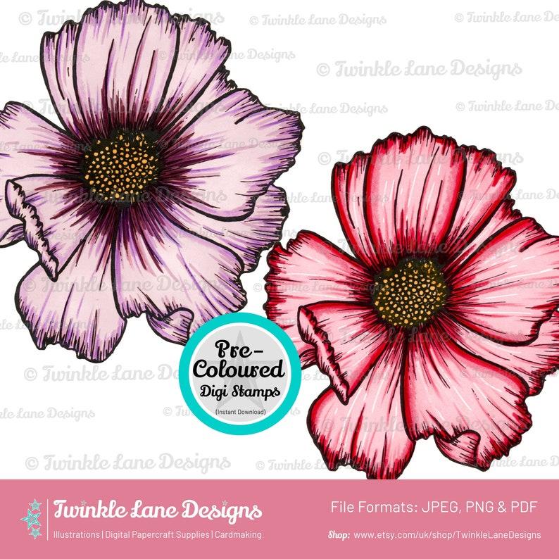 Coloured Cosmos Flower Digi Stamp  Instant Download image 0