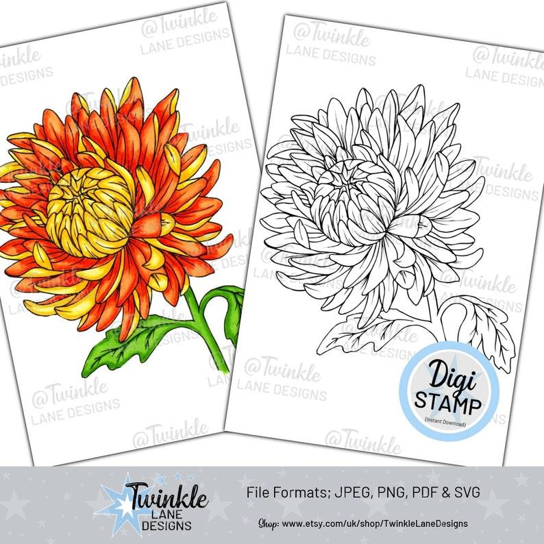 Chrysanthemum Flower  Digi Stamp image 0