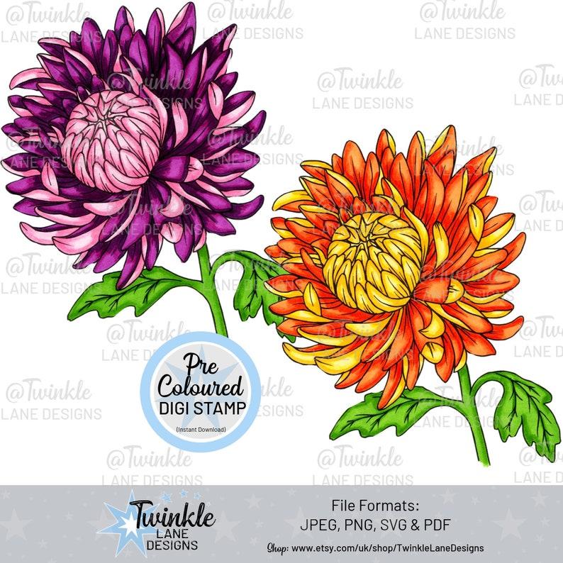 Coloured Chrysanthemums Digi Stamp image 0