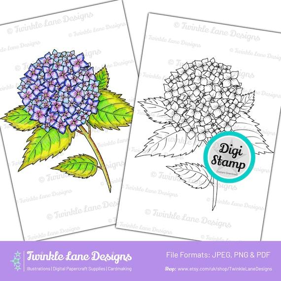 Hydrangea Flower Instant Download Digi Stamp