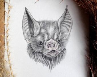 Little Vampire Bat (From the Drawlloween Series) Original drawing by: Melissa Crook
