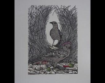 Original Linocut of the Australian Great Bowerbird