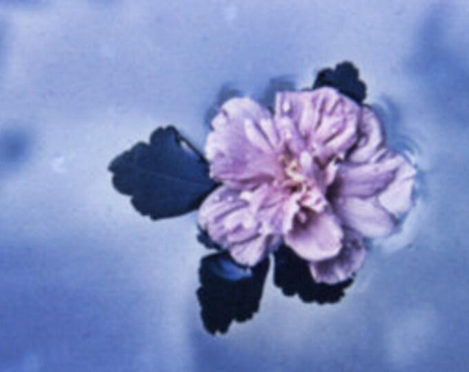 D0266 One Floating Flower May 1972 (Bonus = D0267)