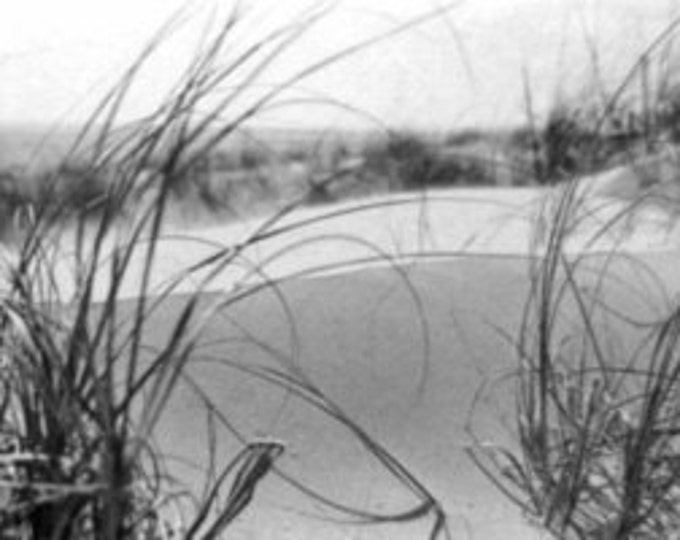 D0031 = South Padre Island,  Sand Dune with Grass  (February 22, 1965)