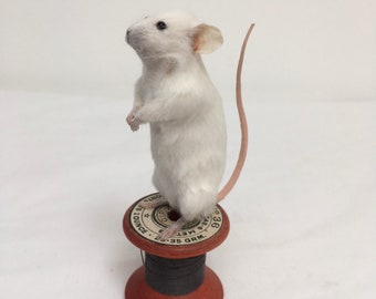 Teddy mouse - taxidermy mouse
