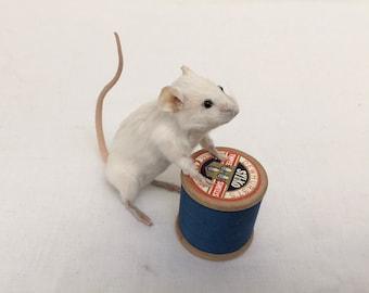 Stuart mouse - taxidermy mouse