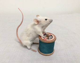 Thomas mouse - taxidermy mouse