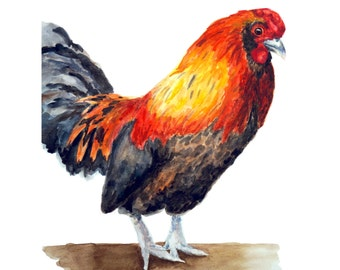 ROOSTER PRINT - farm art, chicken painting, farm painting, chicken art, chicken print, farm animal prints, chicken watercolor, chickens
