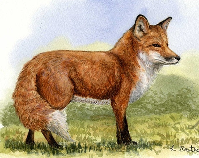 Woodland Project Series: Red Fox (Watercolour by Mouth) - Original, Mounted