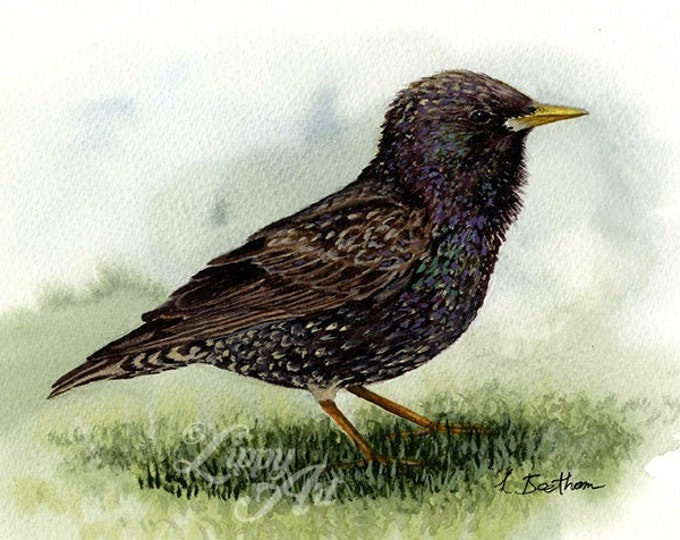 Woodland Project Series: Starling (Watercolour by Mouth) - Original, Mounted