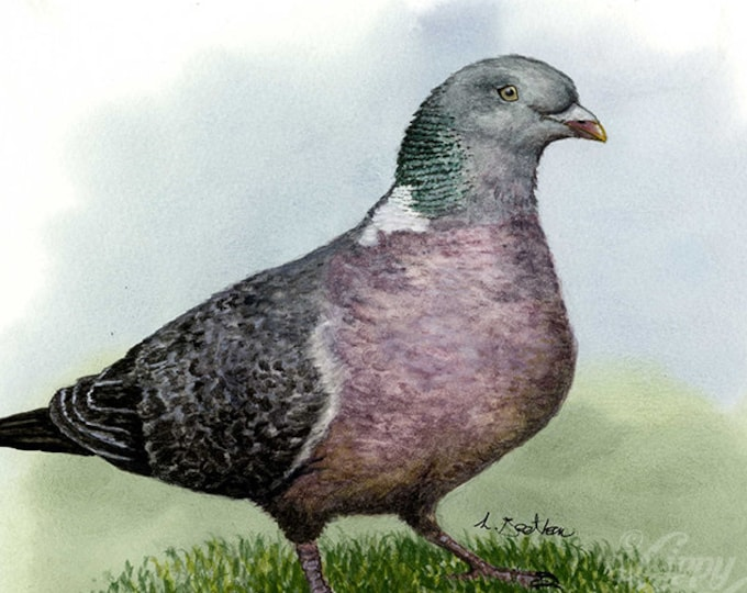 Woodland Project Series: Woodpigeon (Watercolour by Mouth) - Original, Mounted
