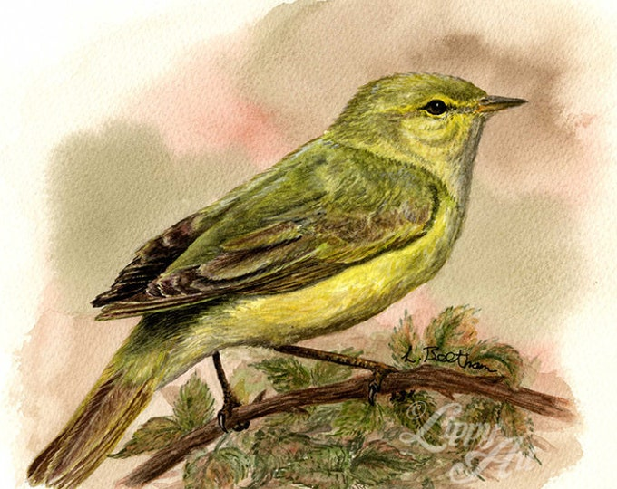 Woodland Project Series: Chiffchaff (Watercolour by Mouth) - Original, Mounted