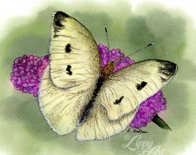 Woodland Project Series: Small White Butterfly (Watercolour by Mouth) - Original, Mounted