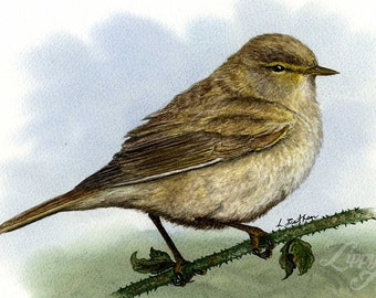 Woodland Project Series: Willow Warbler (Watercolour by Mouth) - Original, Mounted