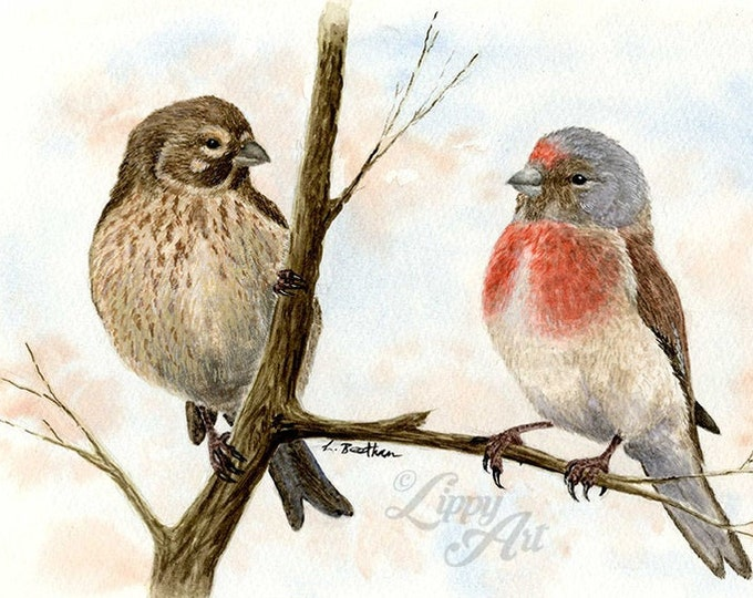 Woodland Project Series: Linnet (Watercolour by Mouth) - Original, Mounted