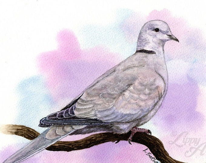 Woodland Project Series: Collared Dove (Watercolour by Mouth) - Original, Mounted