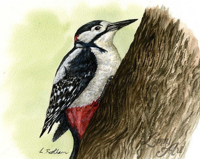Woodland Project Series: Great Spotted Woodpecker (Watercolour by Mouth) - Original, Mounted