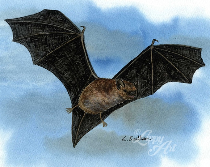 Woodland Project Series: Pipistrelle Bat (Watercolour by Mouth) - Original, Mounted