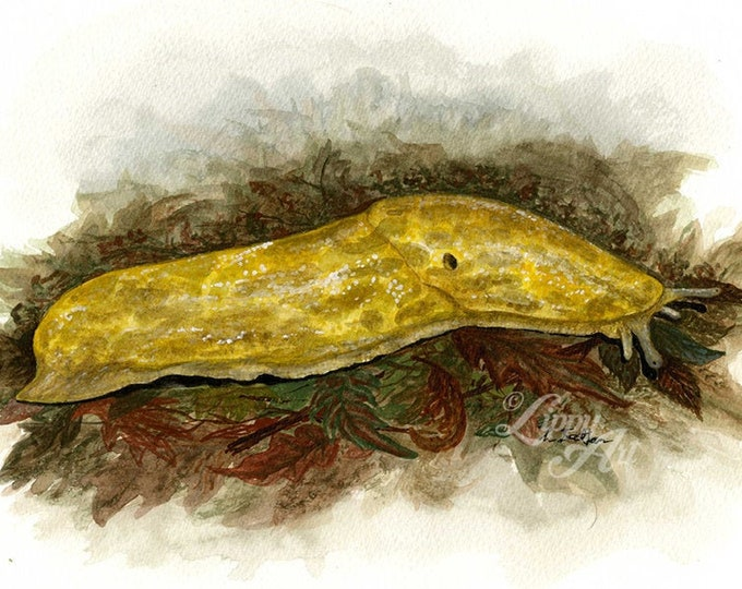 Woodland Project Series: Yellow Slug (Watercolour by Mouth) - Original, Mounted