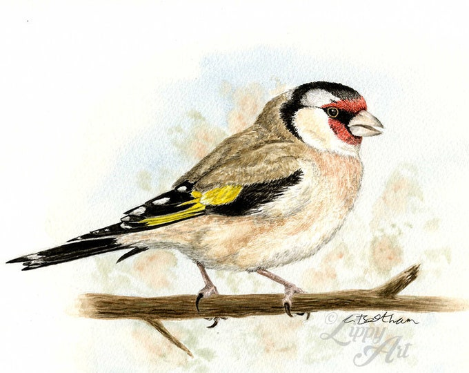Woodland Project Series: Goldfinch (Watercolour by Mouth) - Original, Mounted