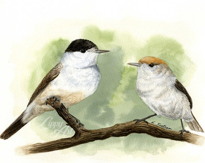 Woodland Project Series: Blackcap (Watercolour by Mouth) - Original, Mounted