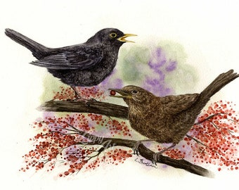Woodland Project Series: Blackbird (Watercolour by Mouth) - Original, Mounted