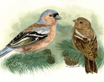 Woodland Project Series: Chaffinch (Watercolour by Mouth) - Original, Mounted