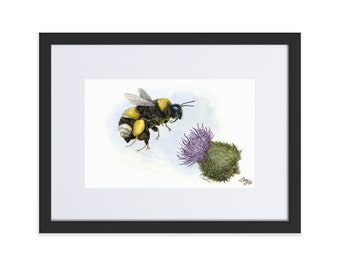 White-Tailed Bumble Bee (Watercolour By Mouth) - Print, Matte, Framed & Mounted (30x40cm)