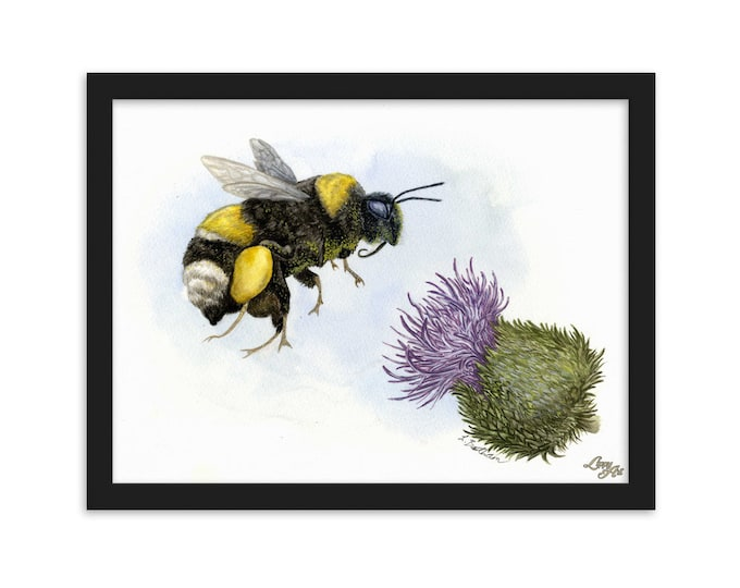 White-Tailed Bumble Bee (Watercolour By Mouth) - Print, Matte, Framed (30x40cm)
