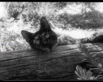 Black Tortoiseshell Cat - On Lookout