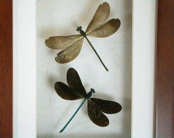 Ebony Jewelwing Damselfly Pair (Calopteryx maculata) -Real Framed Damselfies