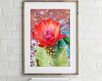 Cactus Wall Art - Printable Succulent - Arizona Desert Botanical Garden Print - Cactus Photography - Red & Pink Flowers - Instant Download