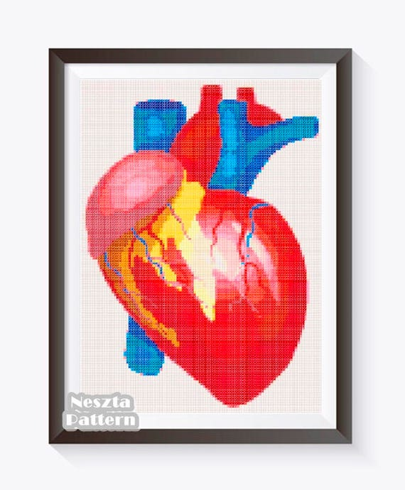 Heart Anatomy Cross Stitch Human Heart Cross Stitch Pattern Etsy