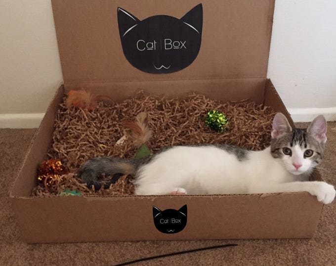 The Original!! CatBox- Activity Box