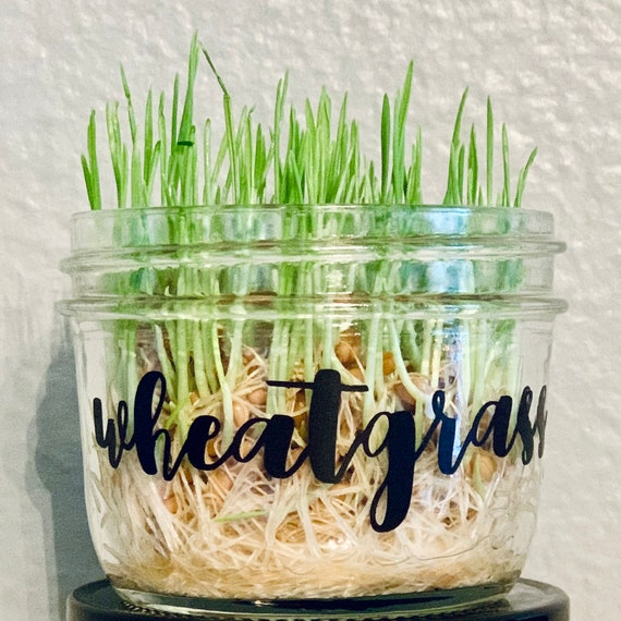 Organic Wheatgrass Kit- Jar w/ 1 oz of seeds