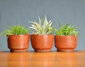 Orange Ceramic Succulent Planter Set, Porcelain Pottery, Herb Garden, Window Planter, Gift for Mom, Air Plant, Cactus Caldwell Pottery