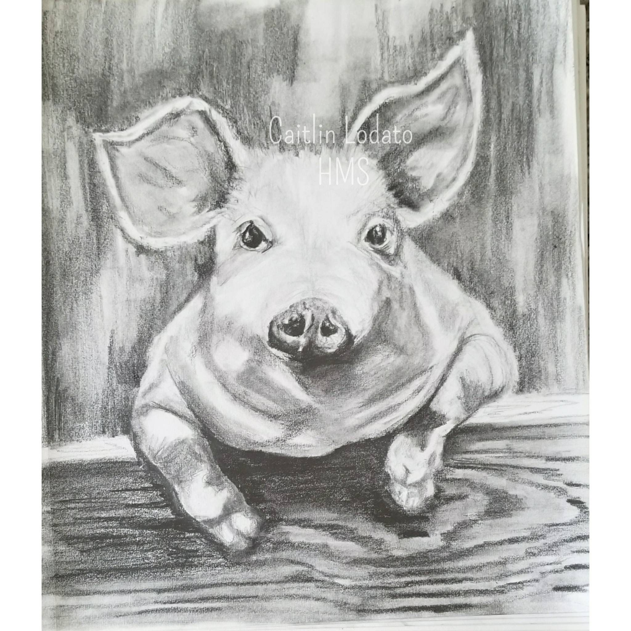 Piggy in pencil pencil drawing of a pig cute pig drawing barnyard pig barnyard animals pig farm animals