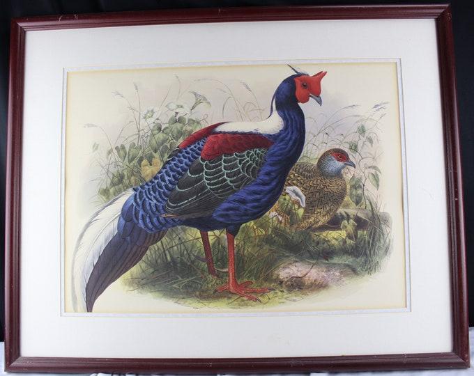 Daniel G. Elliott Swinhoe's Pheasant Vintage Lithograph Taiwan blue pheasant