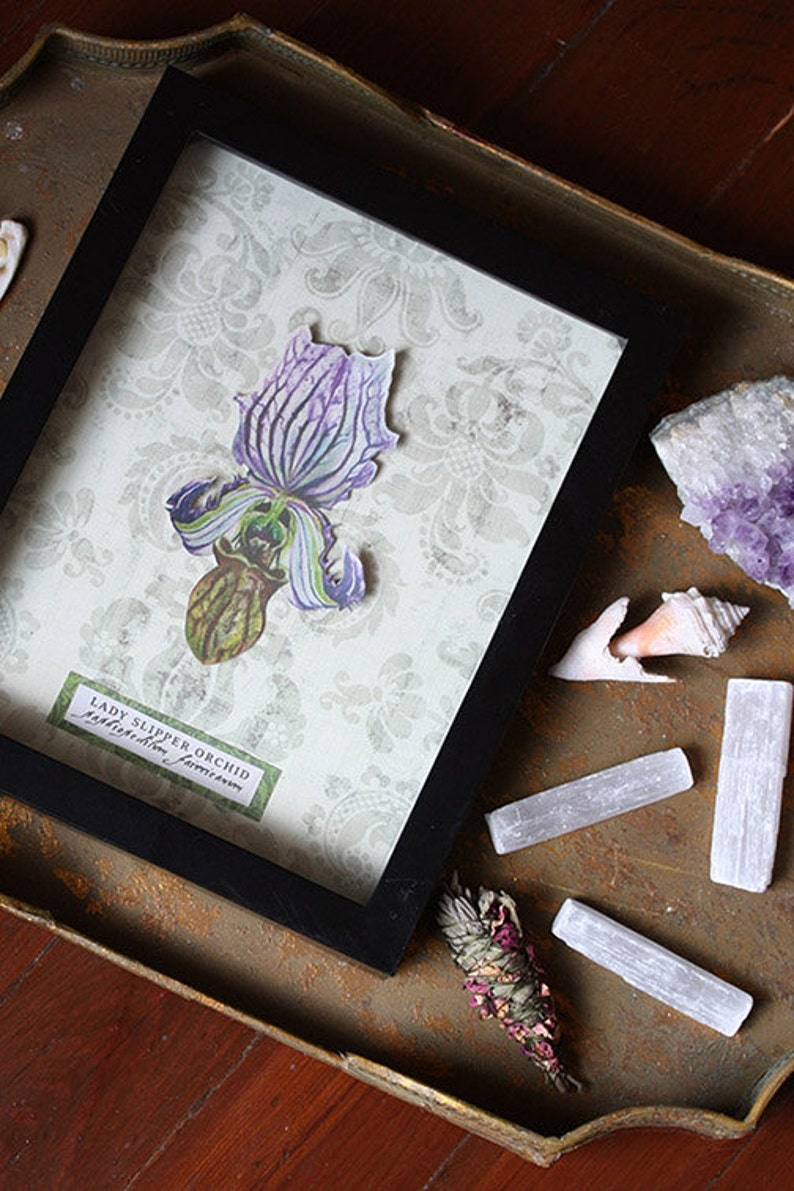 Lady Slipper Orchid Shadow Box image 0
