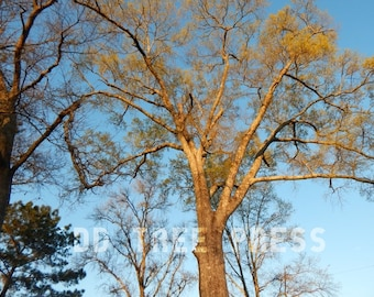 Photo Tree #2 - Digital Download - Prints Available