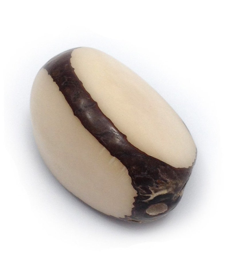 Tagua Nuss groß oliv 35-50mm 1 Stück großer Anhänger Tagua Perle