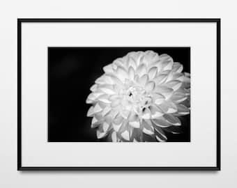 "Fine Art Nature Photo Print • Wall Art • Canvas Wrap • Black & White Monochrome Floral Photography Flower 8x12 • ""White Dahlia"""