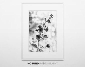 "Fine Art Nature Photo Print • Wall Art • Canvas Wrap • Black & White Monochrome Floral Photography Flowers Vertical 8x12 • ""Silver Light"""