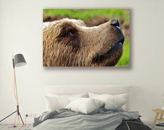 Animal Photography Bear Nature Photography Home Decor Wall Decor Seasonal Decor PH0106